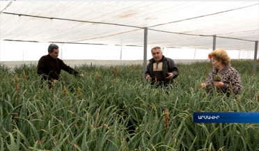 Aloe growers expecting pharmaceutical company demands