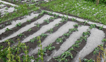 Aragatsotn crop partially damaged by hail
