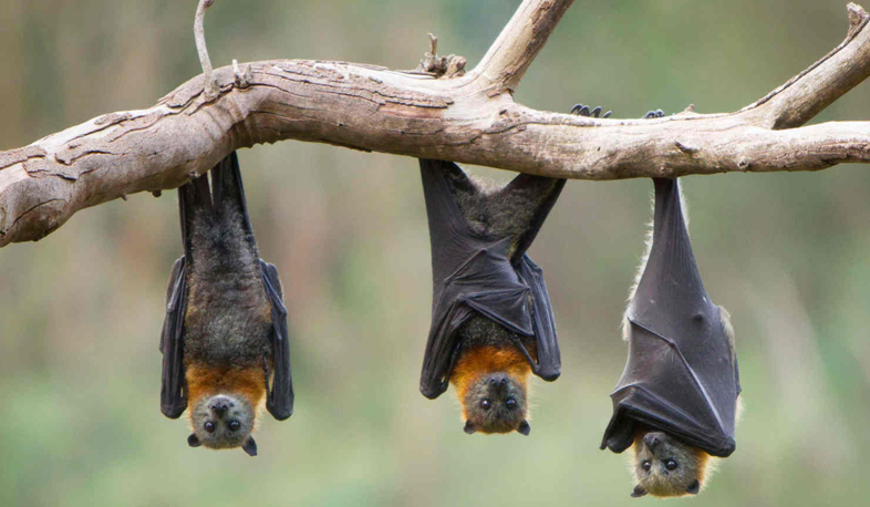 International Bat Night celebrated on August 26