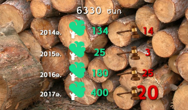 6500 trees cut in three years in Dilijan National Park