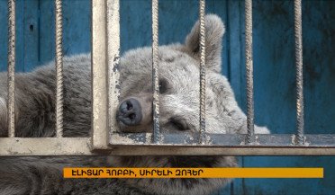 First bear shelter to open in Armenia