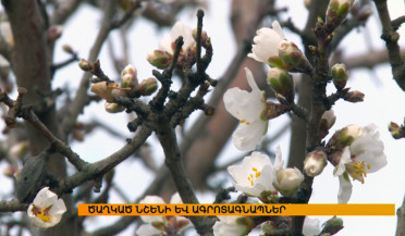 Flowered almond tree and agricultural alert