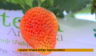 Artik grows strawberries in winter