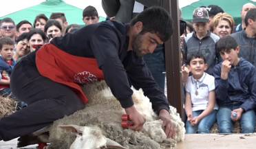 Sheep shearing festival to become international