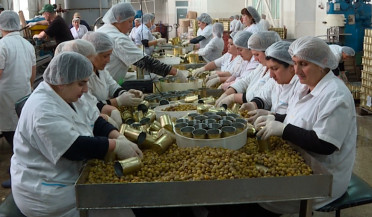 Olives produced in Armenia in foreign markets