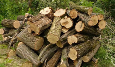 State fights against illegal felling