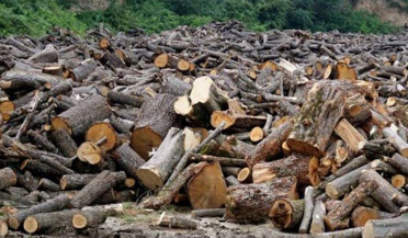 Fight against illegal felling