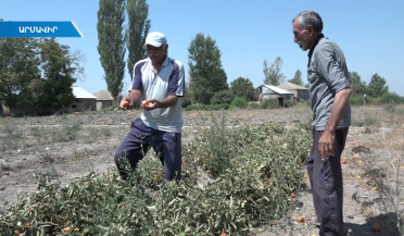 Irrigation water problem in Armavir